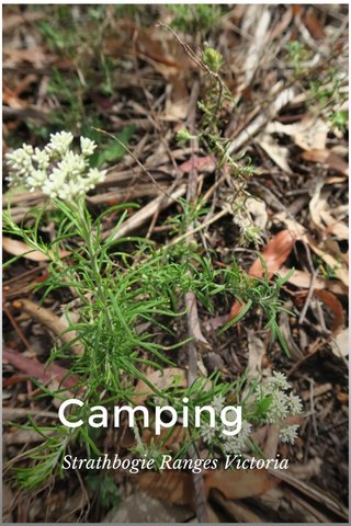 Camping Strathbogie Ranges Victoria