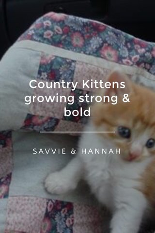 Country Kittens growing strong & bold SAVVIE & HANNAH