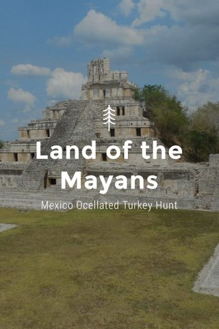 Land of the Mayans Mexico Ocellated Turkey Hunt