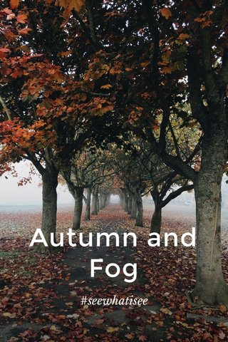 Autumn and Fog #seewhatisee