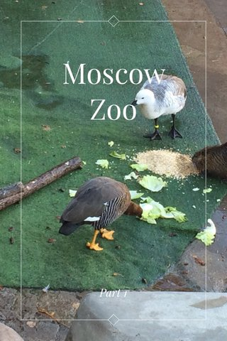 Moscow Zoo Part 1