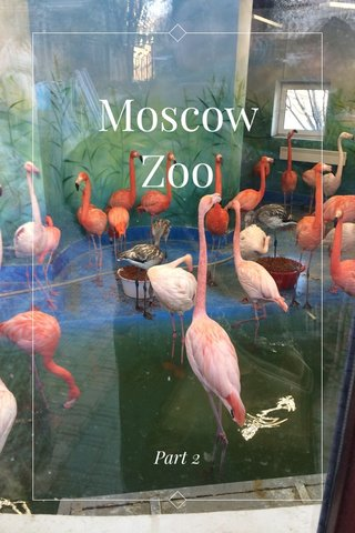 Moscow Zoo Part 2