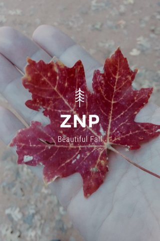 ZNP Beautiful Fall