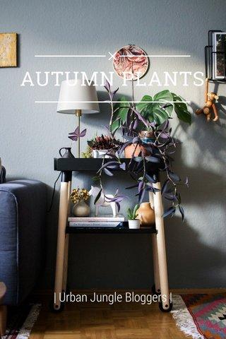 AUTUMN PLANTS | Urban Jungle Bloggers |