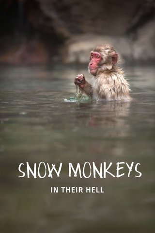 SNOW MONKEYS IN THEIR HELL
