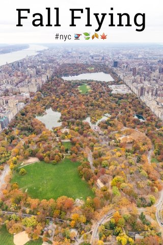 Fall Flying #nyc 🚁🍃🍂🍁