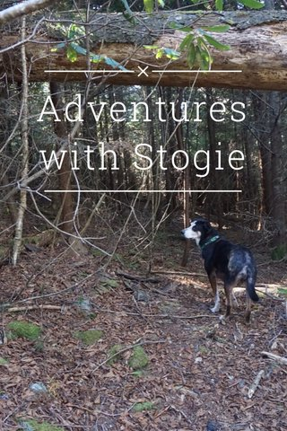 Adventures with Stogie