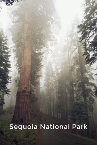 Sequoia National Park National Park