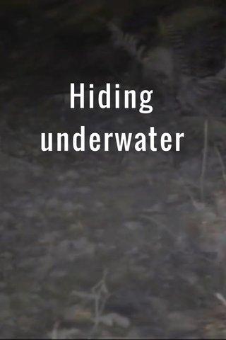 Hiding underwater