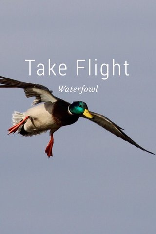 Take Flight Waterfowl