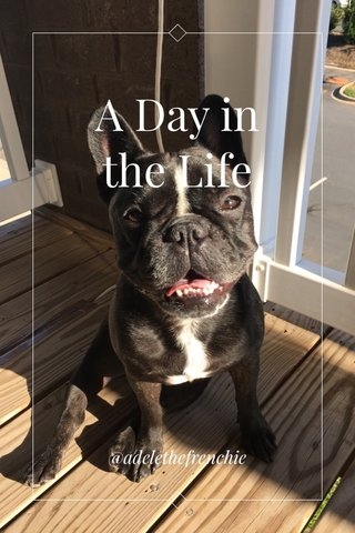 A Day in the Life @adelethefrenchie