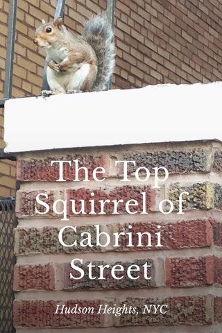 The Top Squirrel of Cabrini Street Hudson Heights, NYC
