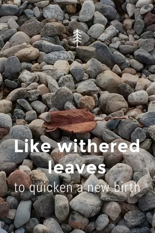Like withered leaves to quicken a new birth