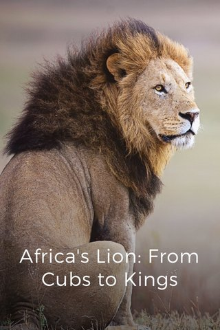 Africa's Lion: From Cubs to Kings