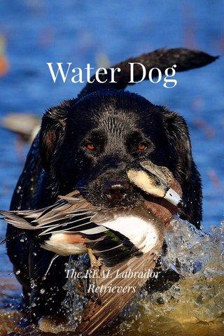 Water Dog The REAL Labrador Retrievers