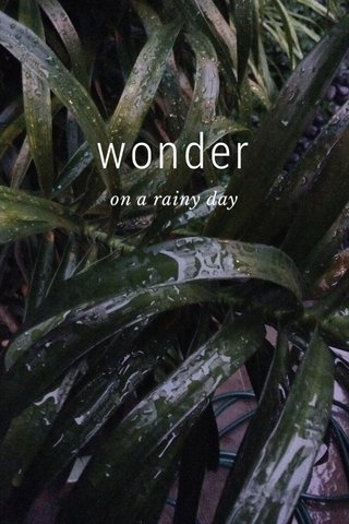 wonder on a rainy day