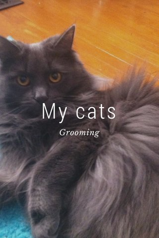 My cats Grooming
