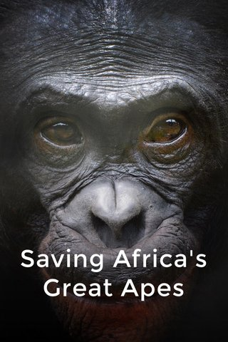 Saving Africa's Great Apes