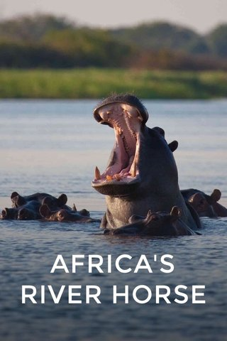 AFRICA'S RIVER HORSE