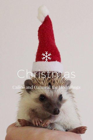Christmas Calico and Oatmeal the Hedgehogs
