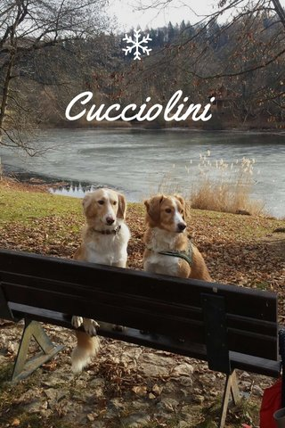 Cucciolini