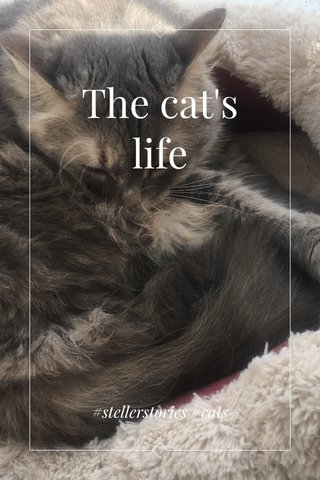 The cat's life #stellerstories #cats