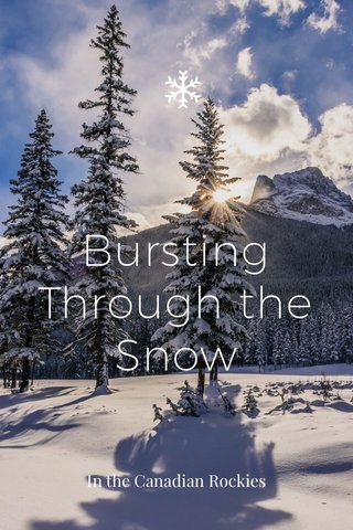 Bursting Through the Snow In the Canadian Rockies
