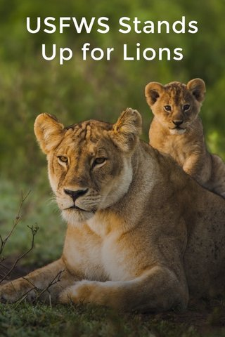 USFWS Stands Up for Lions