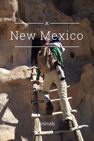 New Mexico Animals