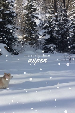 aspen merry christmas