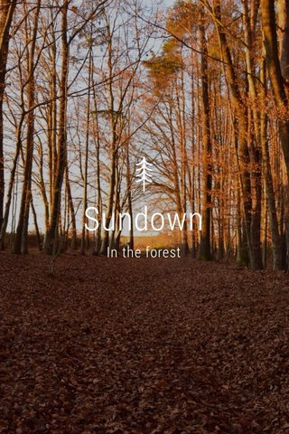 Sundown In the forest