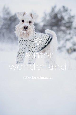 winter wonderland @hectorschnauzer
