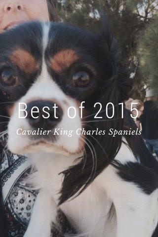 Best of 2015 Cavalier King Charles Spaniels