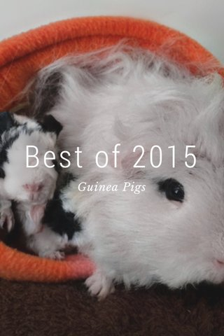 Best of 2015 Guinea Pigs