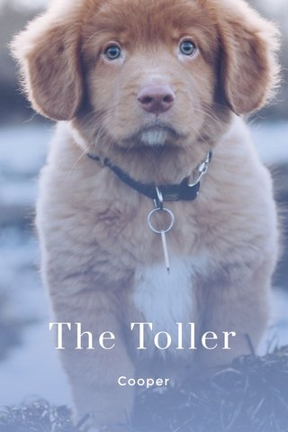 The Toller Cooper