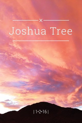 Joshua Tree | 1•2•16 |