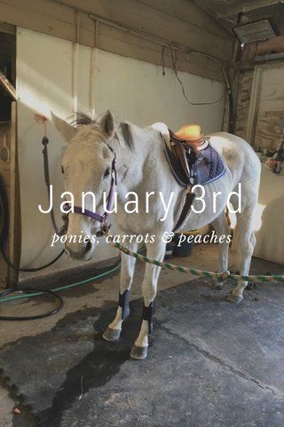 January 3rd ponies, carrots & peaches
