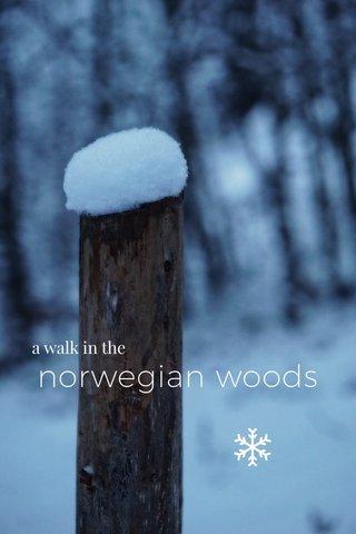 norwegian woods a walk in the