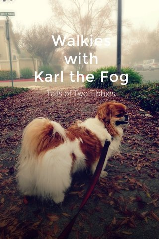Walkies with Karl the Fog Tails of Two Tibbies