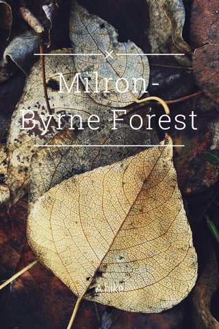 Milron-Byrne Forest A hike