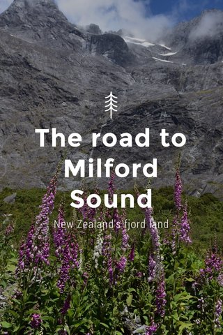 The road to Milford Sound New Zealand's fjord land
