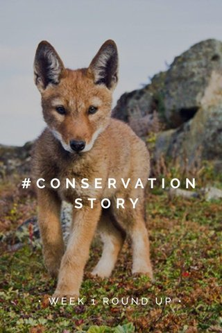 #CONSERVATIONSTORY • WEEK 1 ROUND UP •