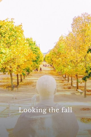 Looking the fall
