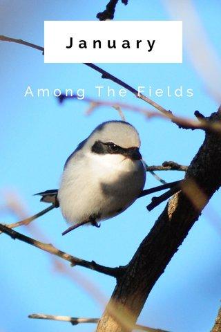 January Among The Fields