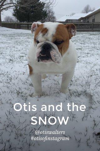 Otis and the SNOW @otiswalters #otisofinstagram