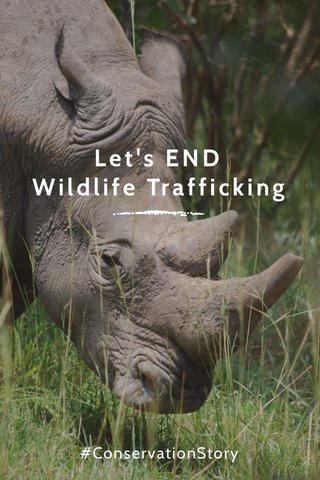 Let's END Wildlife Trafficking