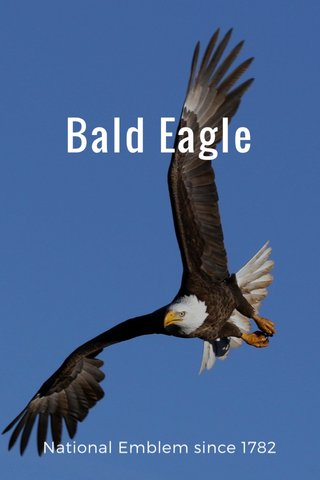 Bald Eagle National Emblem since 1782