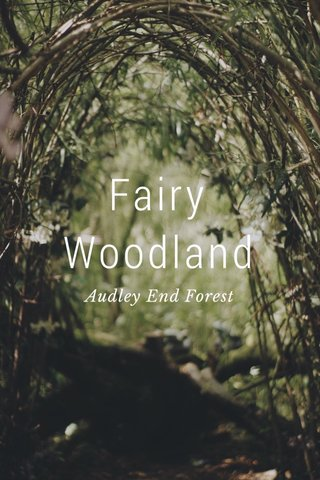 Fairy Woodland Audley End Forest