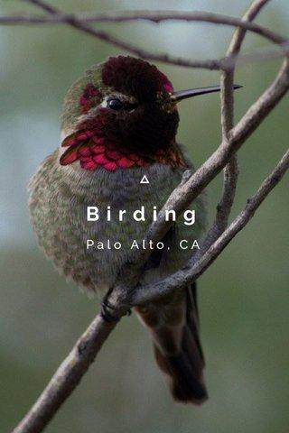 Birding Palo Alto, CA