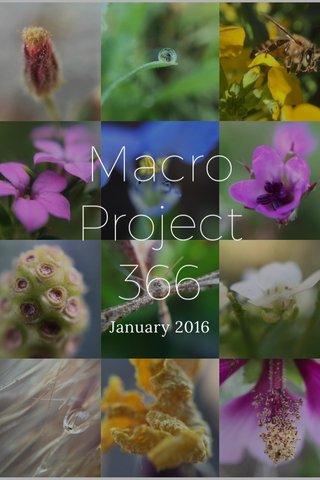 Macro Project 366 January 2016